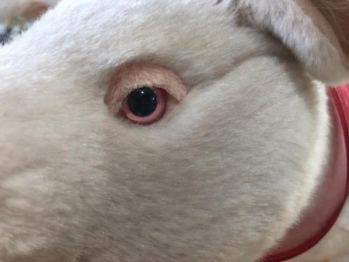 豚 横浜 の牧場 横浜