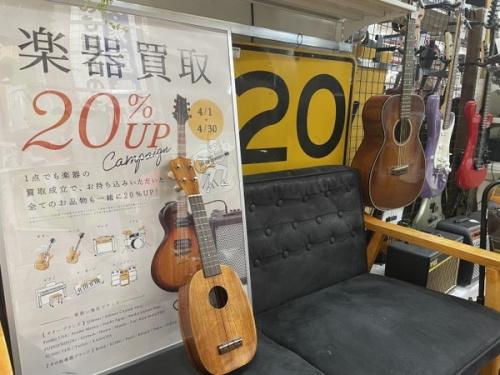 中古楽器店 の弦楽器 ウクレレ